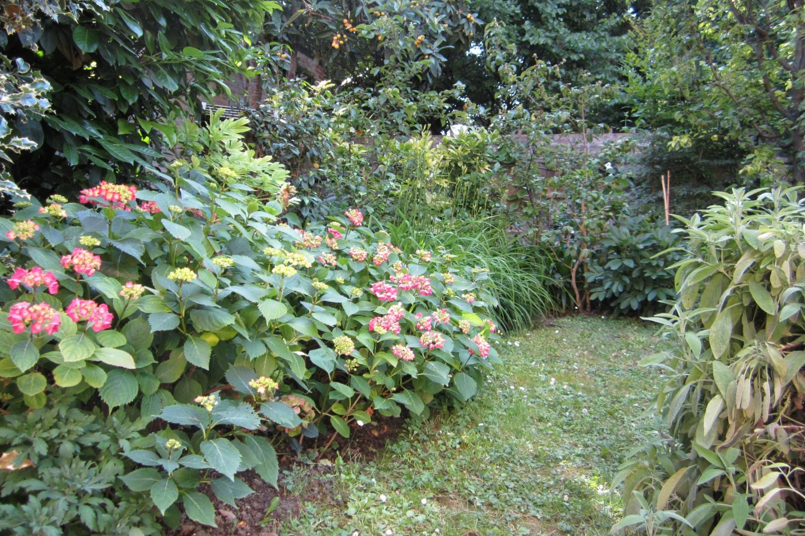Coltivazione plantulae for Bordura giardino