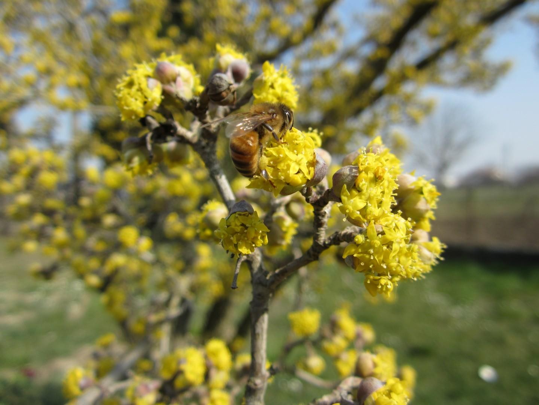 Api e bombi su fiori primaverili 1 plantulae - Fiori primaverili ...